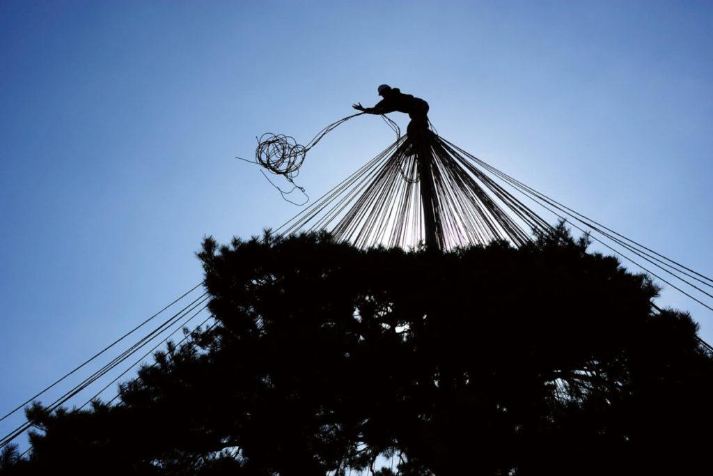 「雪吊繩」  職人們爬上松樹頂端工作的景像,是這個地區獨一無二的光景。