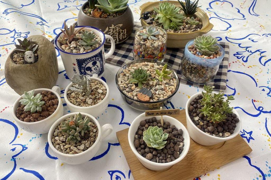 療癒植栽使用二手盆器製作而成,兼具環保理念。